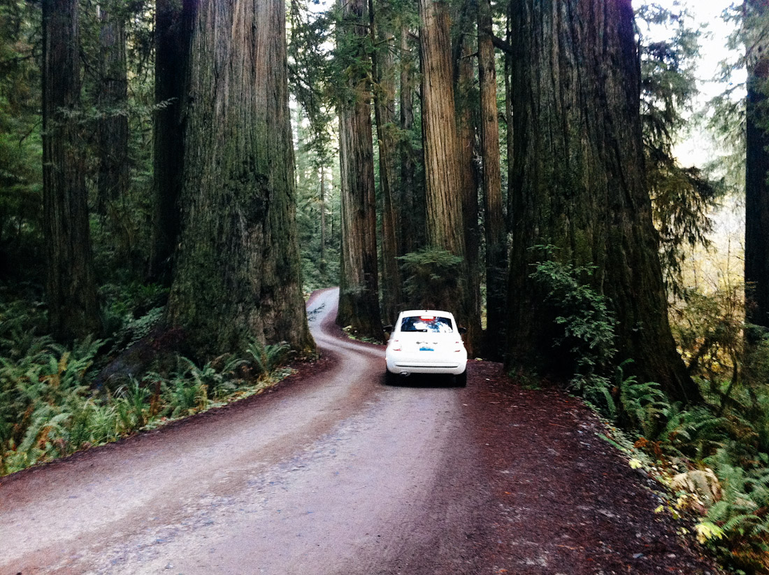 jdesantis-redwoods-iphone-3